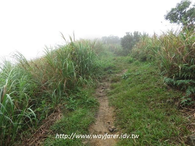 瑞芳登山步道一日遊茶壺山