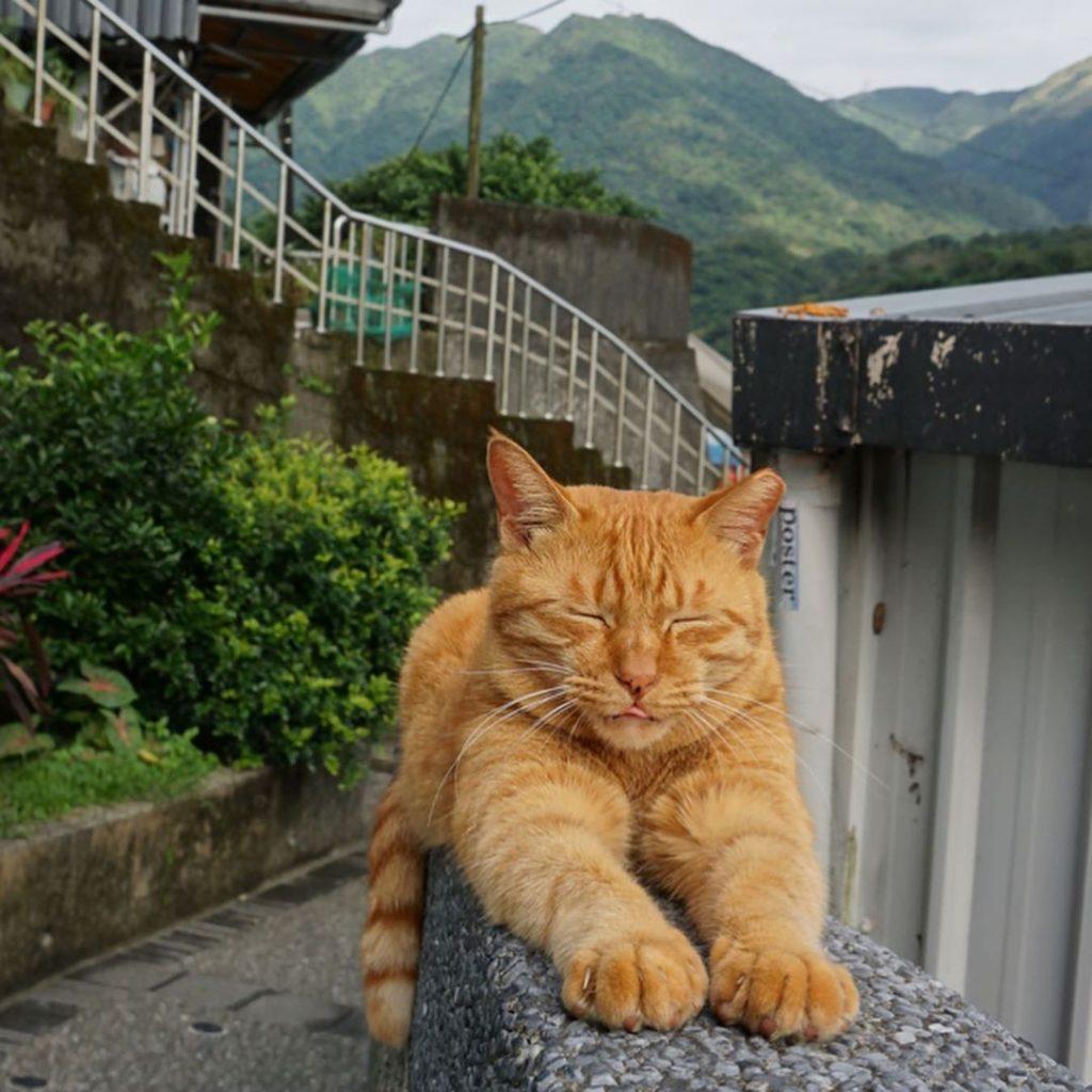 猴硐貓村 貓咪照片